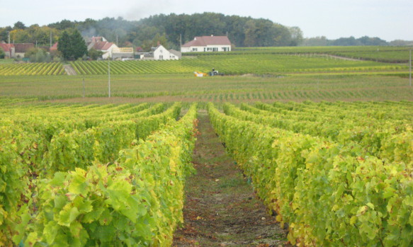 Domaine_du_Pre_Baron vineyard.jpg