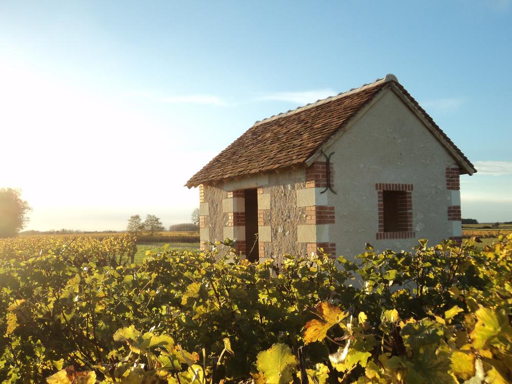 House in the vines.jpg