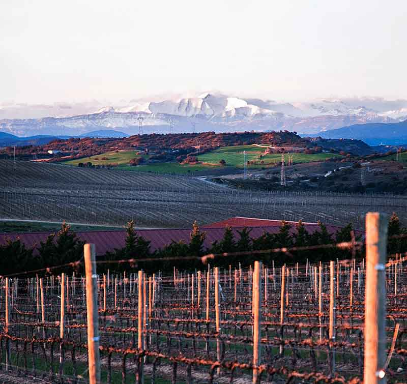 Sommos vineyards, mountains in distance.jpg