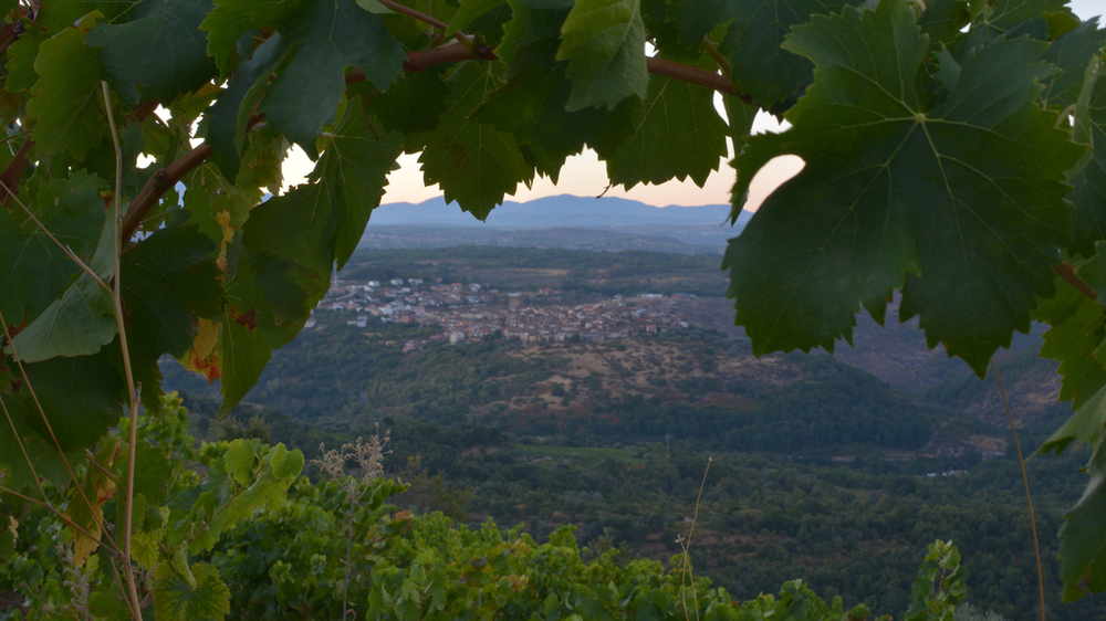 Cambrico view of moutains through vines.JPG