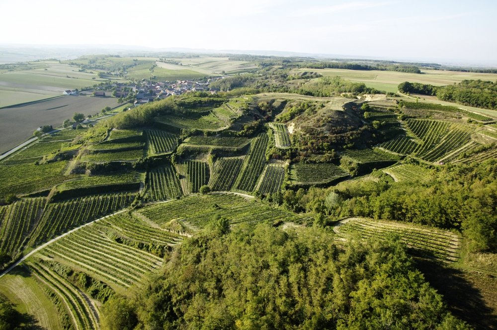 Mehofer vineyards aerial photo.jpg