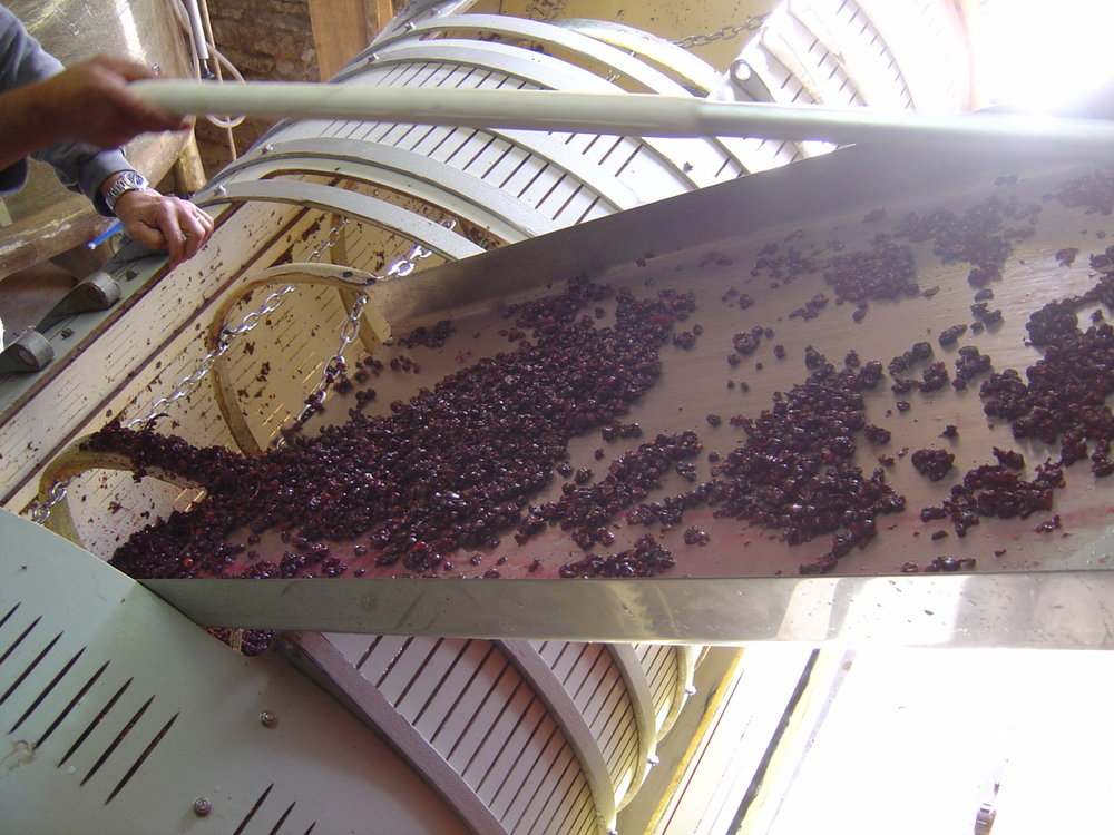 Sliding grapes into a press.JPG