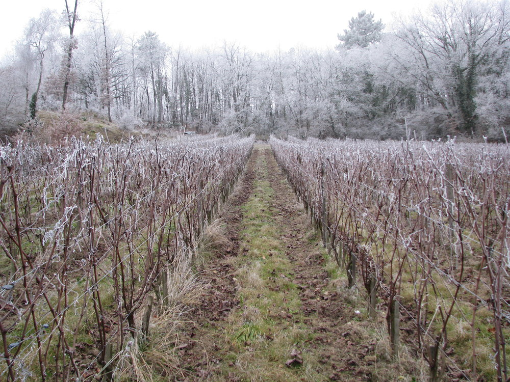 L'Arpenty vineyard in winter.JPG