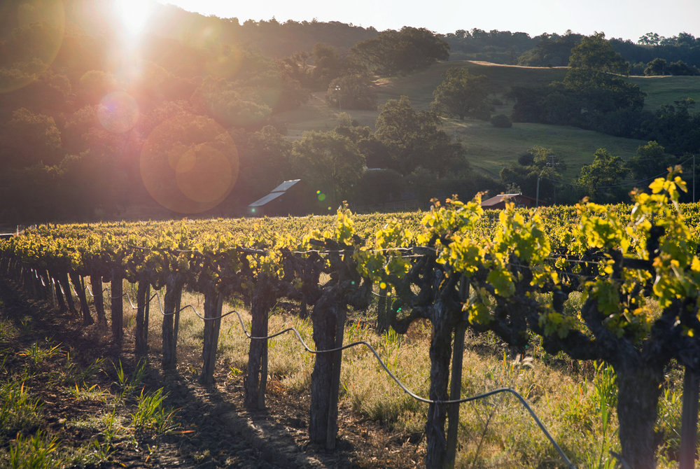 Vineyard and hillside.jpg