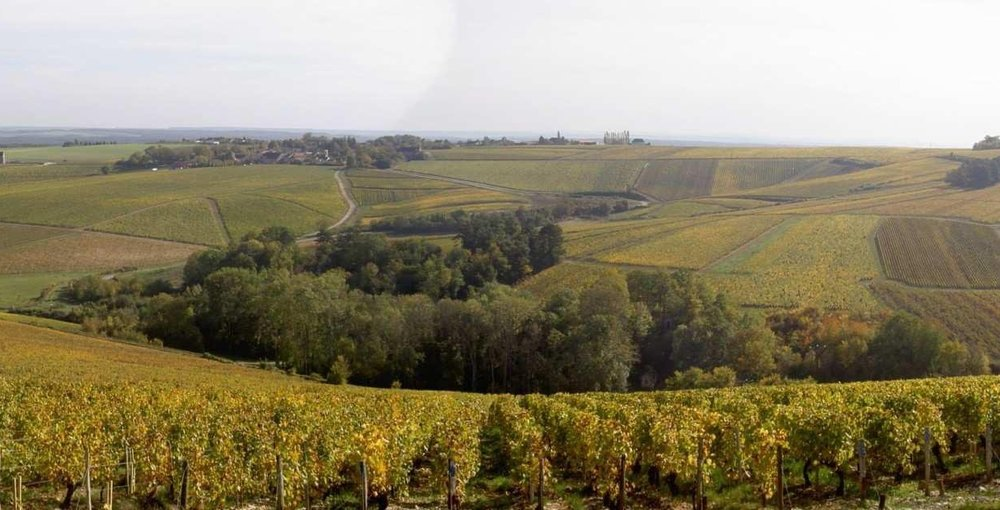 Vineyards panorama.jpg