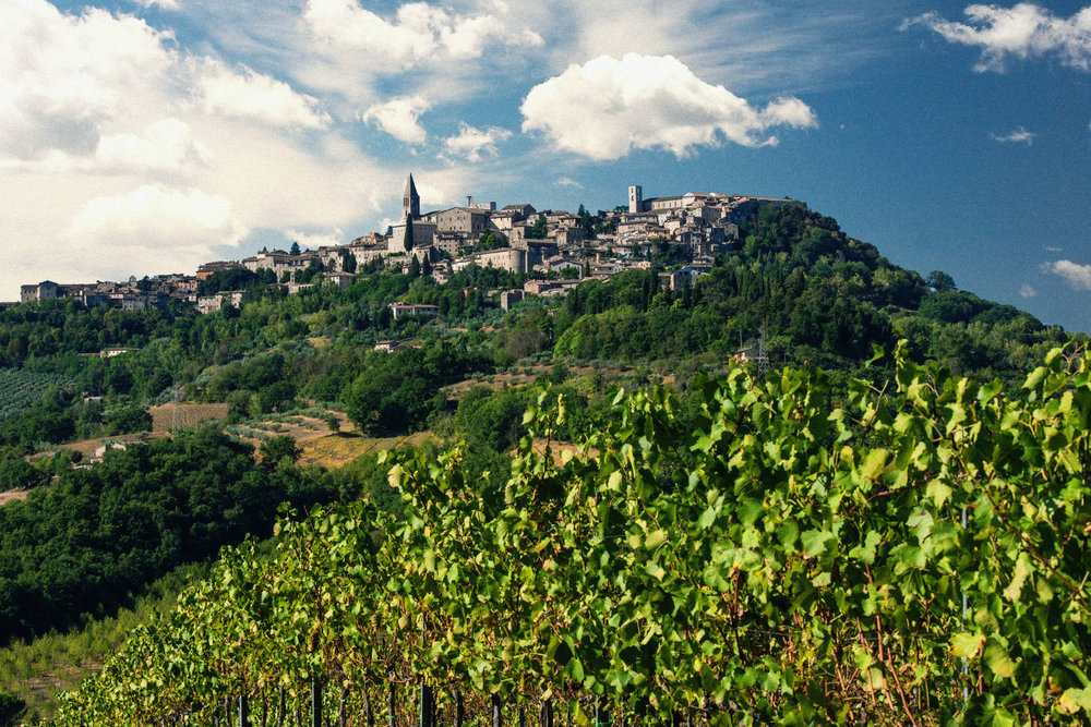 View of village through vines 2.jpg