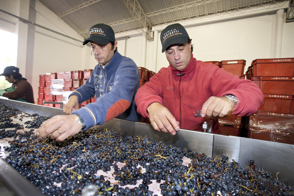 Grape sorting 2.jpg