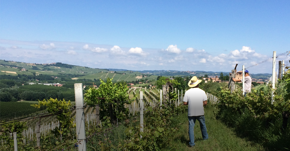 Vineyard and view.png