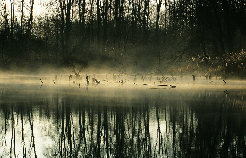 〖 shallow fog 〗
