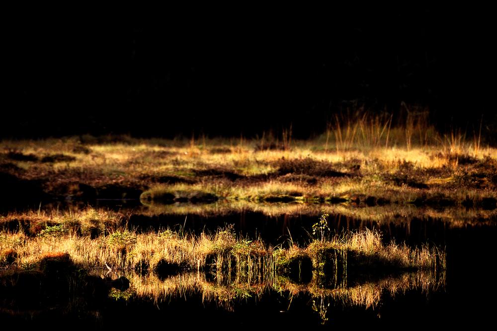 〖 on golden pond 〗