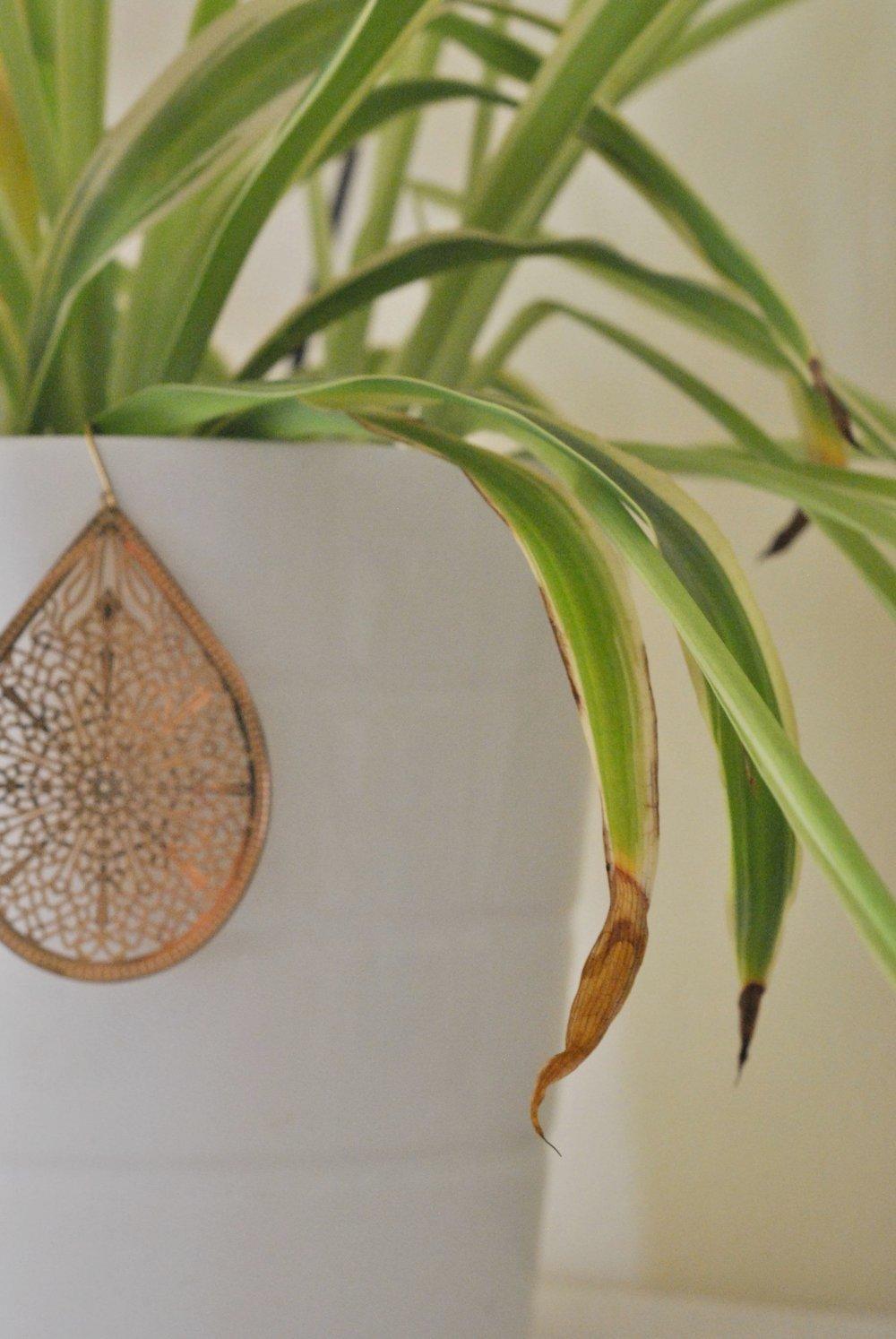 Clorofito - da Urban Plant Life