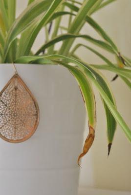 spider plant - UmBlogMuitoSimples