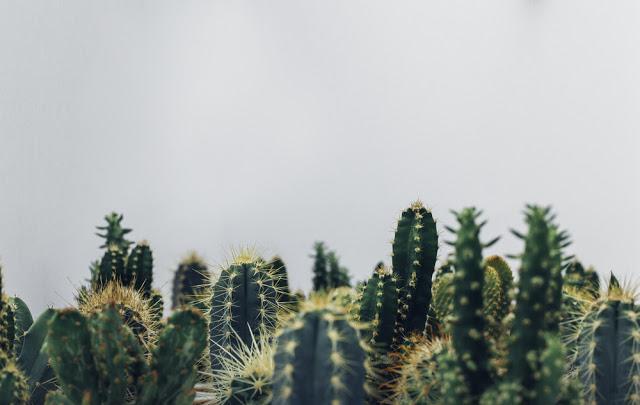 cactus - UmBlogMuitoSimples
