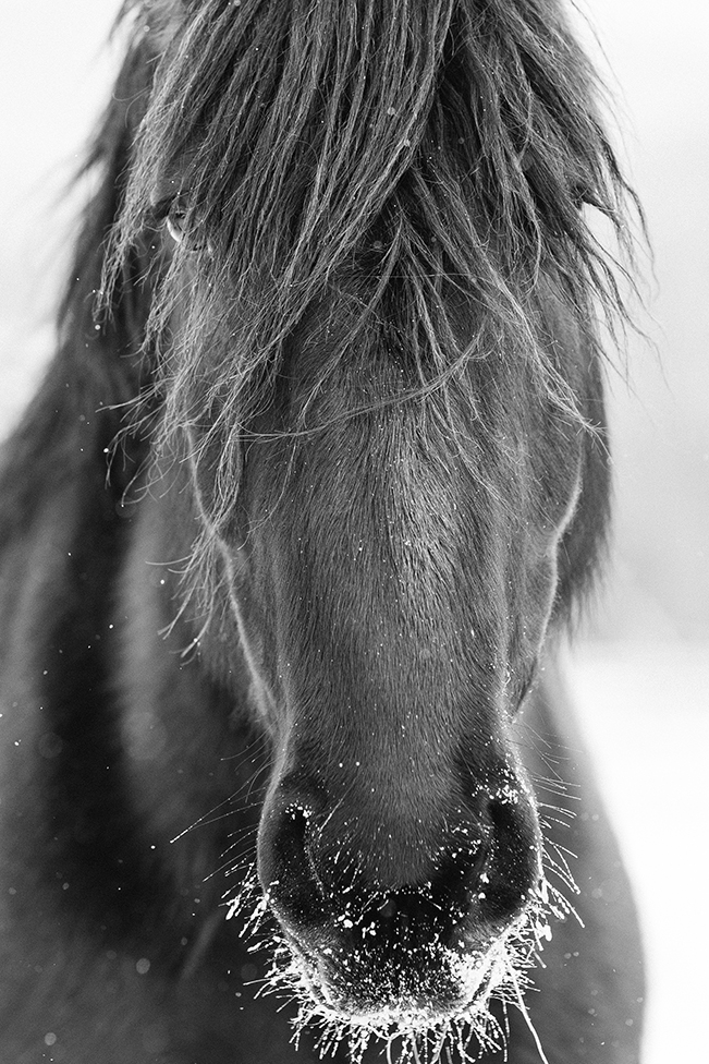 Lone Horse Photograph by Tracey Buyce