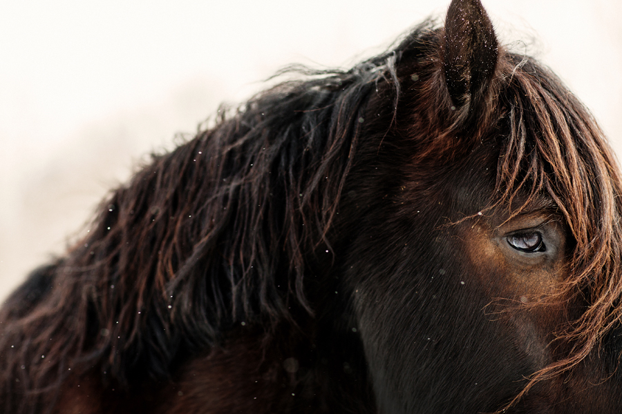 The Soul of a Percheron Photograph by Tracey Buyce