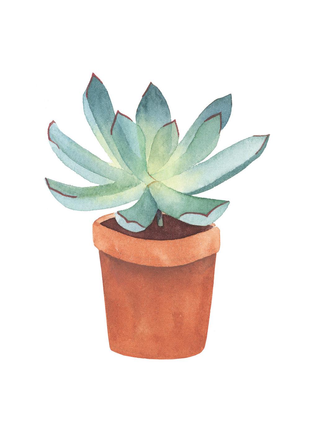 Succulent2.jpg
