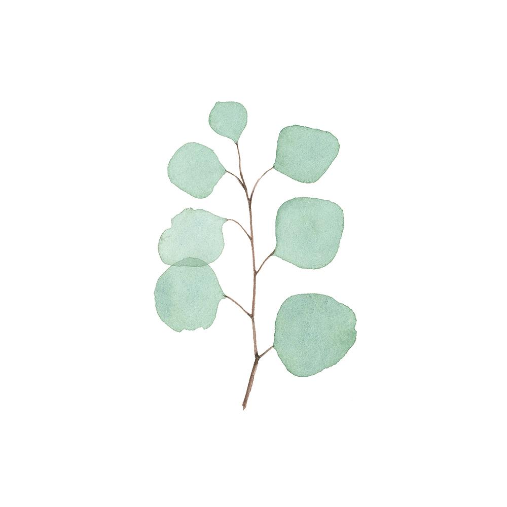Watercolor Eucalyptus Sprig