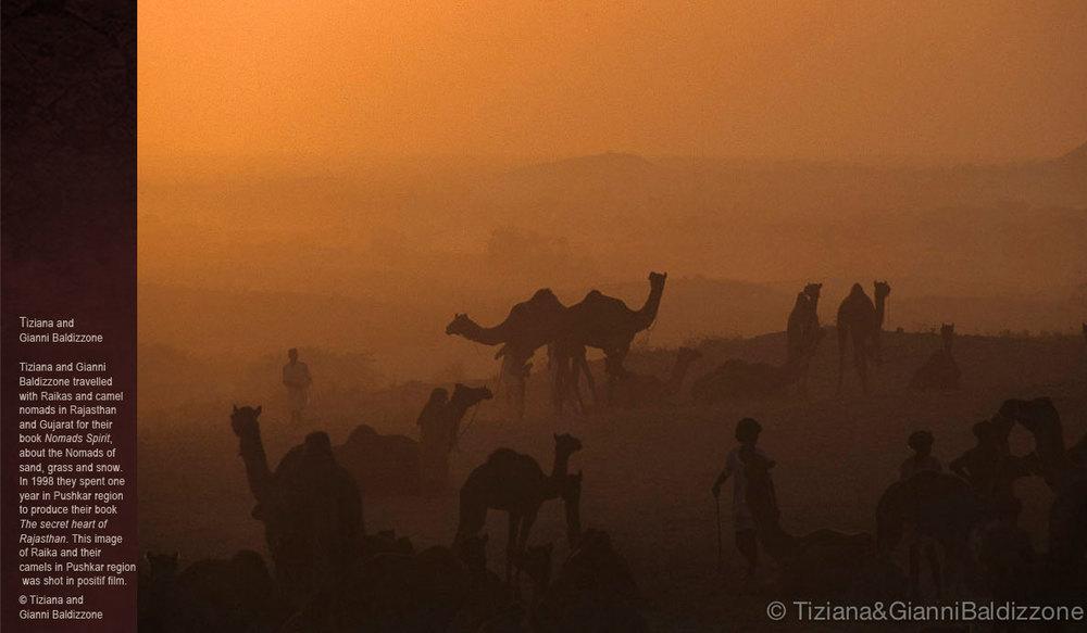 Camels-of-Rajasthan_Tiziana-e-Gianni-Baldizzone.jpg