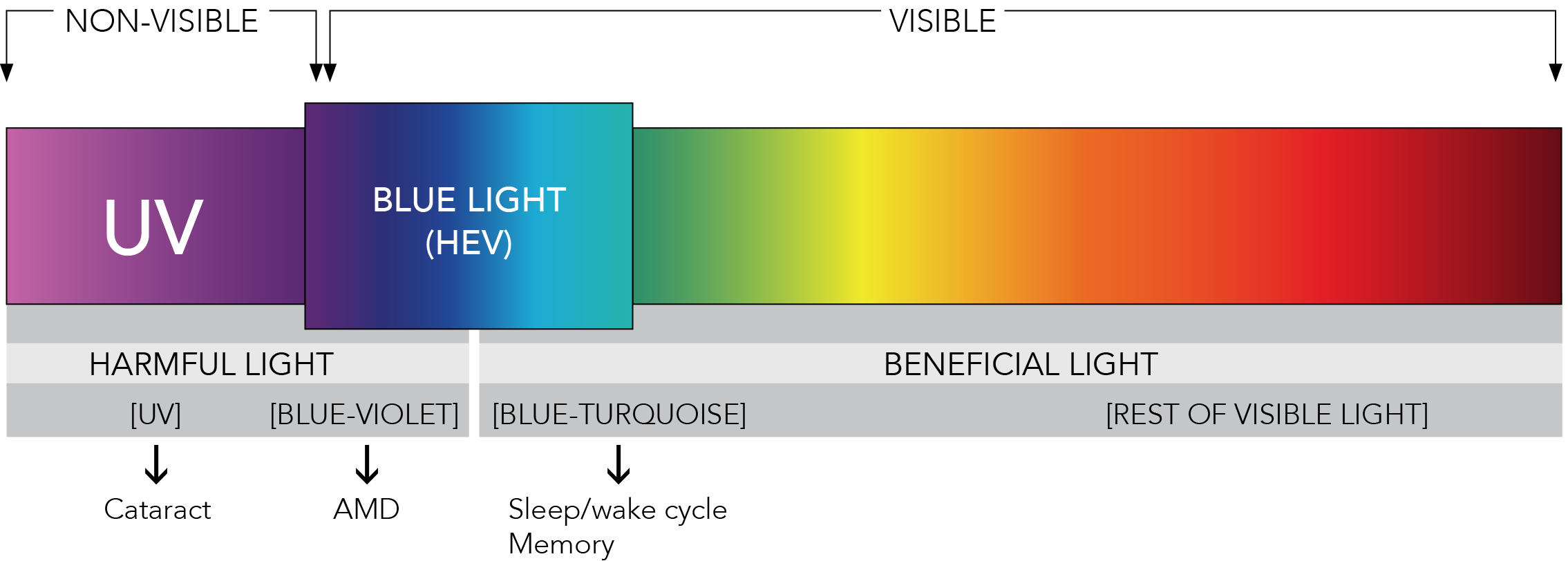 what is blue light blue light exposed