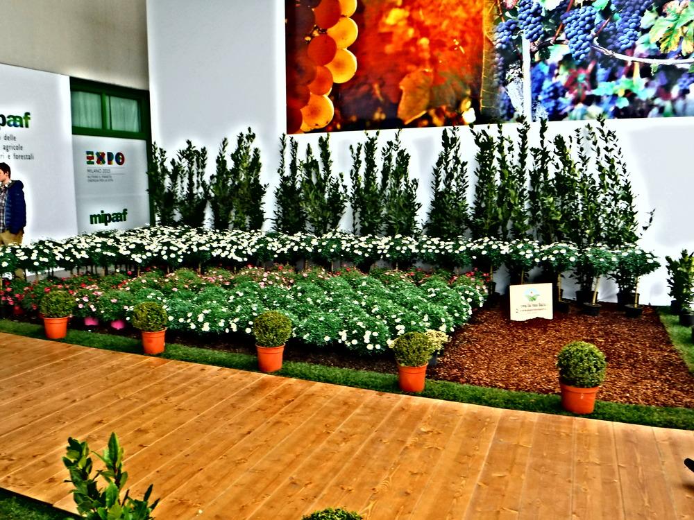 2.Sol&AgrifoodOrganicFlowers&Plants.JPG