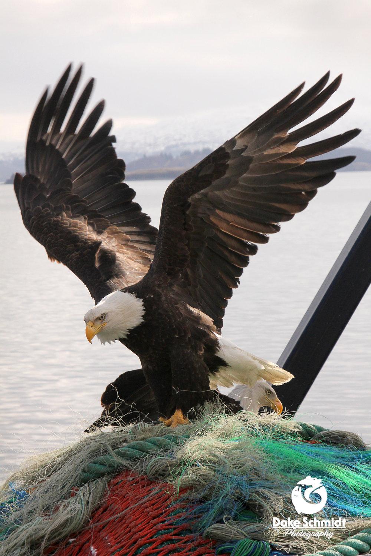 Becky's Eagle.jpg