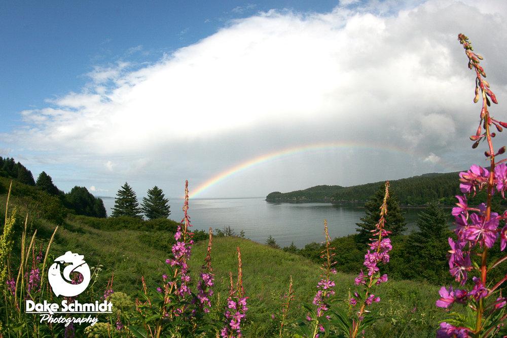 Fireweed Rainbow.jpg
