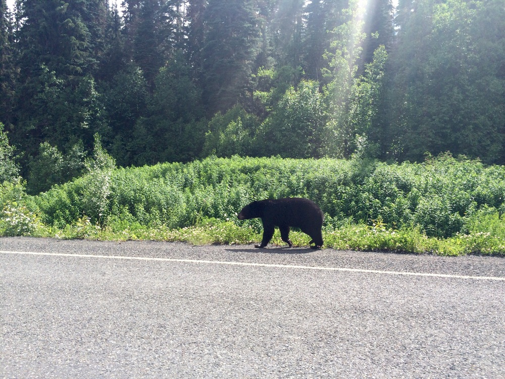 One of the black bears