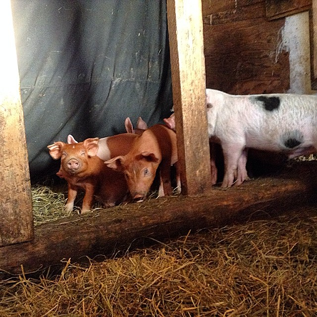 New additions to the farm.