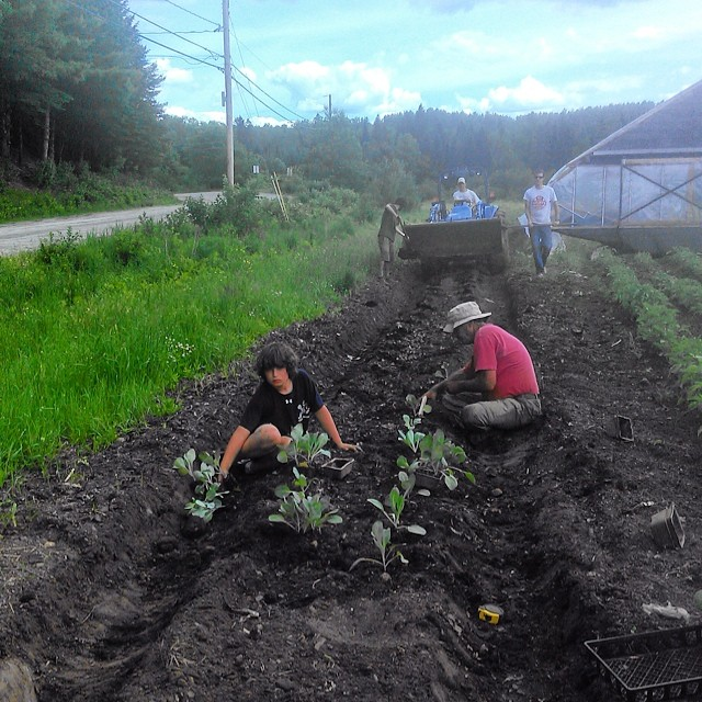 Cole, Jim, Sam, Tim, and Bridger working hard planting Cabbage, Kohlrabi, and Red Russian Kale.