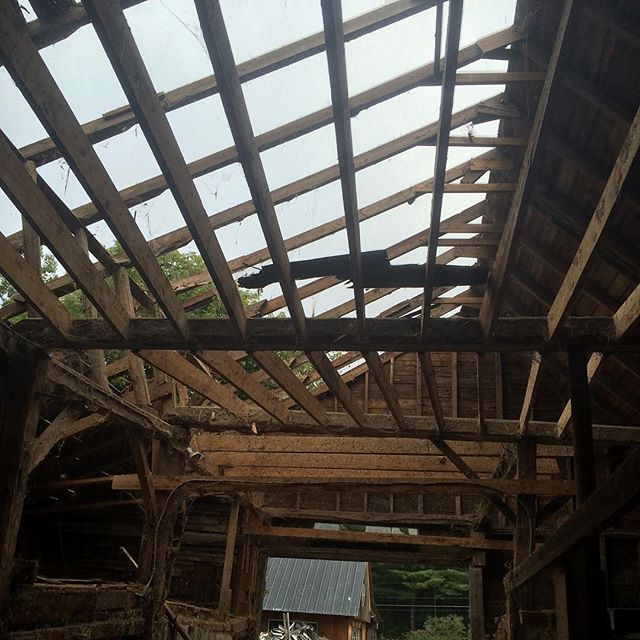 The barn swallows headed south this past weekend so the tired barn began coming down today. Bitter sweet but necessary.