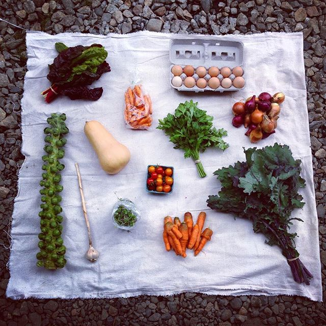 Fall CSA week 8 pick-up. What a fall it has been!