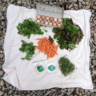 Spring CSA has begun: 1 dzn eggs, 1 wheel chevre, tomme, arugula, micro greens, baby carrots, basil, Swiss chard.