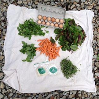Spring CSA has begun: 1 dzn eggs, 1 wheel chevre, tomme, arugula, micro greens, baby carrots, basil, Swiss chard.
