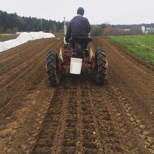Marking rows with the basket weeder to plant onions