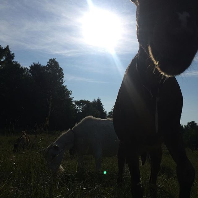 Morning sun in the pasture