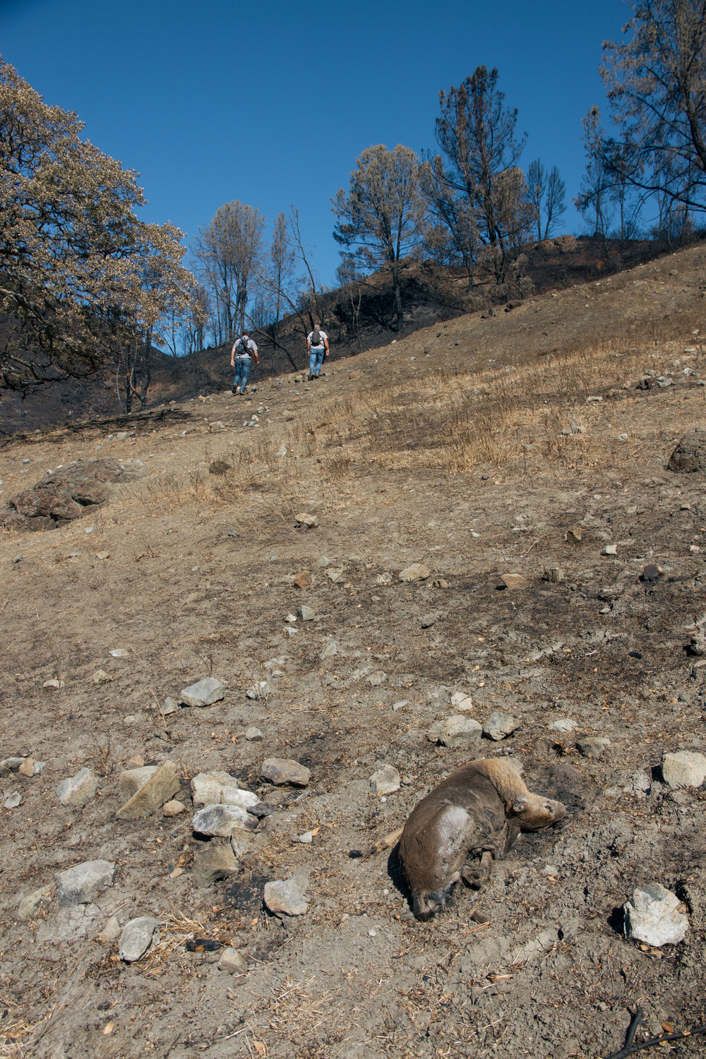 Doe likely asphyxiated (not burned) during the Valley Fire