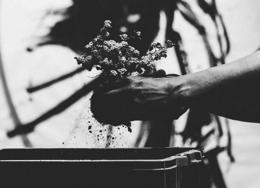 植物と掛け軸