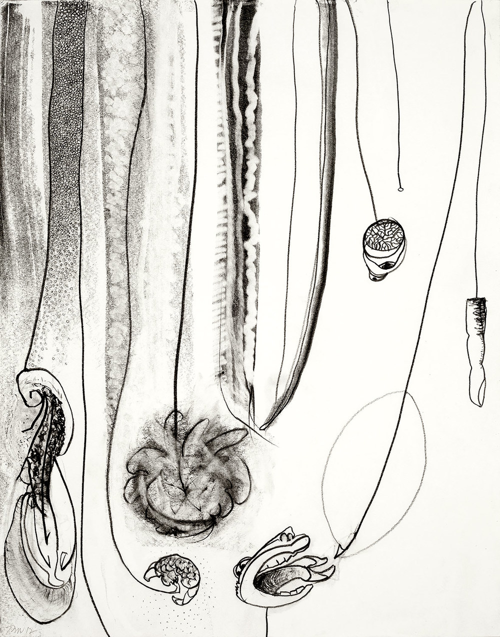 """Brian Wood <br> """"Shell Game"""" <br> Graphite on paper <br> 14 x 11 in."""