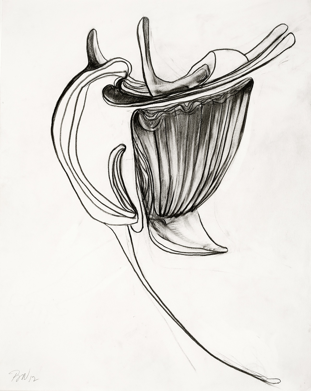 "Brian Wood <br> ""Osteon,"" 2012 <br> Graphite on paper <br> 14 x 11 in."