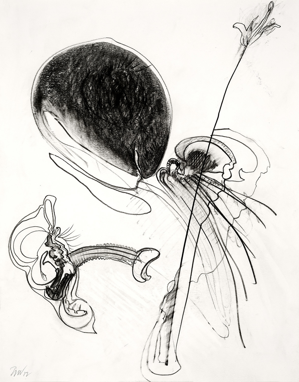 "Brian Wood <br> ""Broach,"" 2012 <br> Graphite on paper <br> 14 x 11 in."