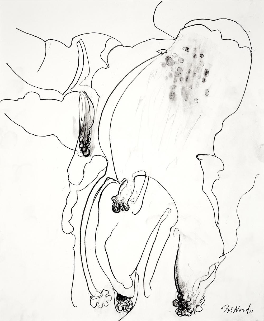 "Brian Wood <br> ""Baobab,"" 2011 <br> Graphite on paper <br> 17 x 14 in."