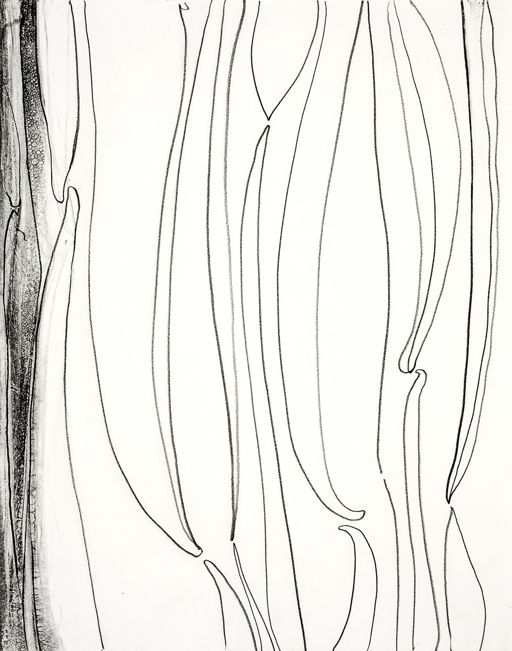"""Brian Wood <br> """"Cement Line"""" <br> Graphite on paper <br> 14 x 11 in."""