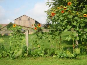 Elkdale Farm & Studio