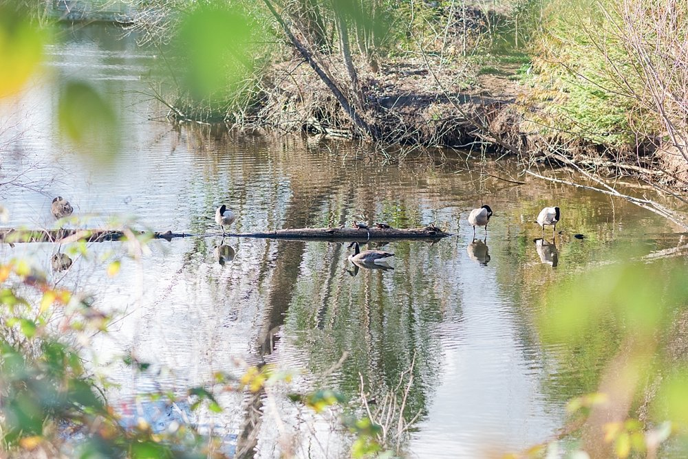 This one you can click on to make it bigger - there are two cute little turtles on that log!