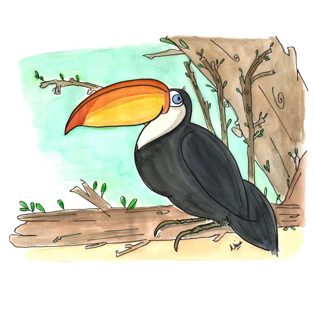 05. Toucan.png