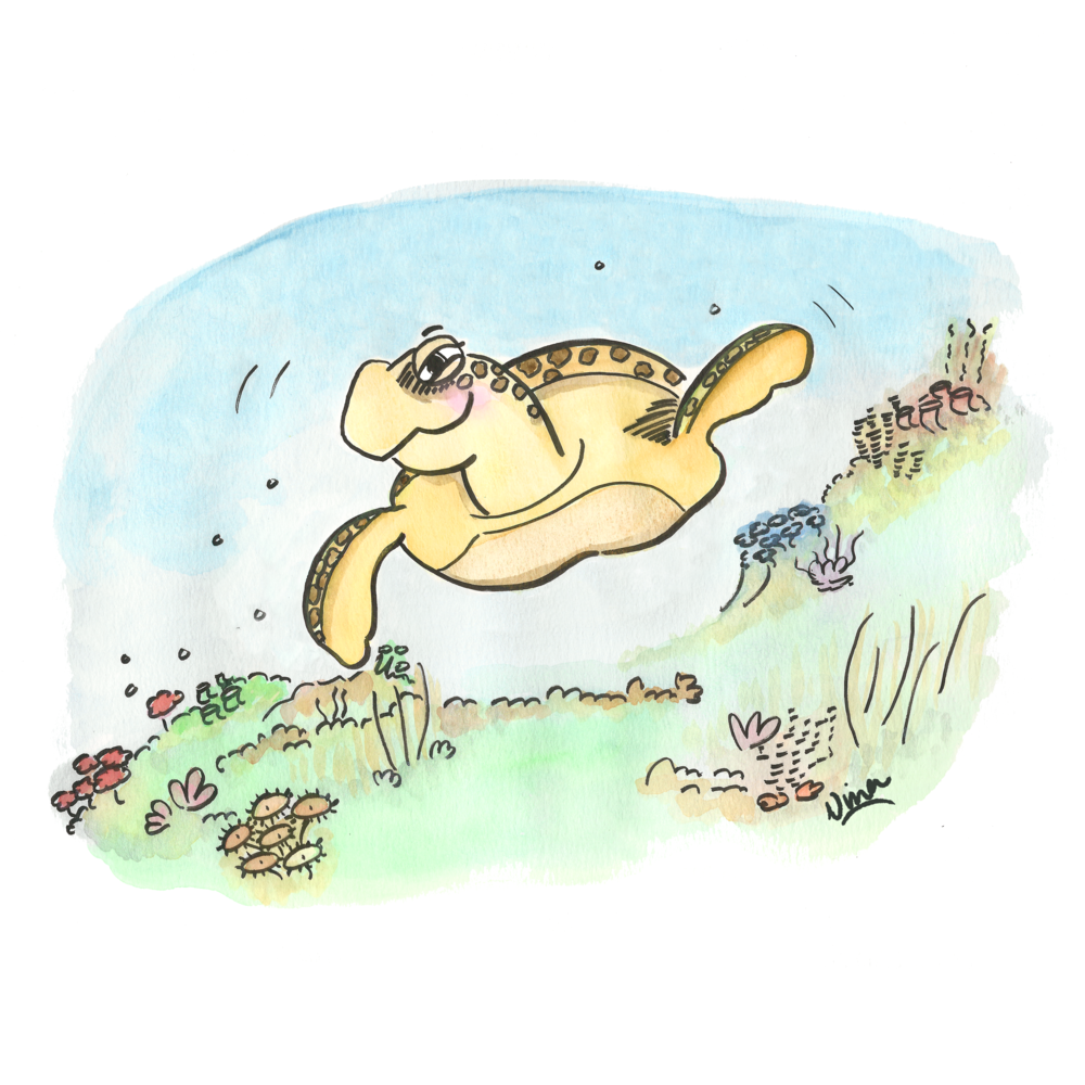 07. Turtle.png