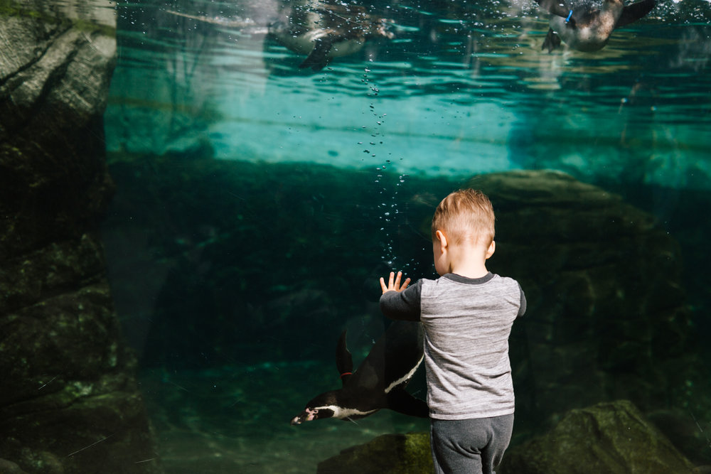 seattle_family_photographer_woodland_park_zoo-7.jpg