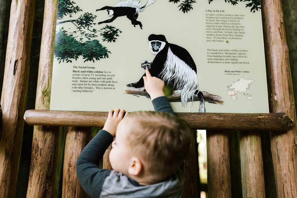 seattle_family_photographer_woodland_park_zoo-16.jpg