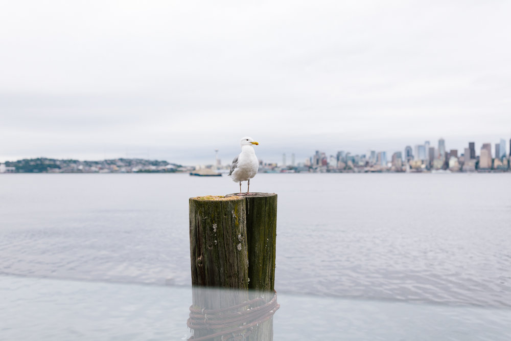 alki_seattle_waterfront_wedding-39.jpg