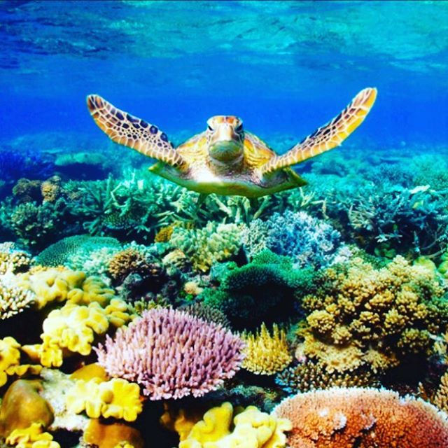 """Obituary: Great Barrier Reef (25 Million BC-2016) Climate change and ocean acidification have killed off one of the most spectacular features on the planet."" -@outsidemagazine  #oceans #instatravel #photooftheday #tbt #rip #saveourplanet #greatbarrierreef #climatechange #sadderday #oceans #beauty #instatravel #australia #nomad #cntraveler #travelandleisure #wanderlust #friday #travelnews #travelblogger"